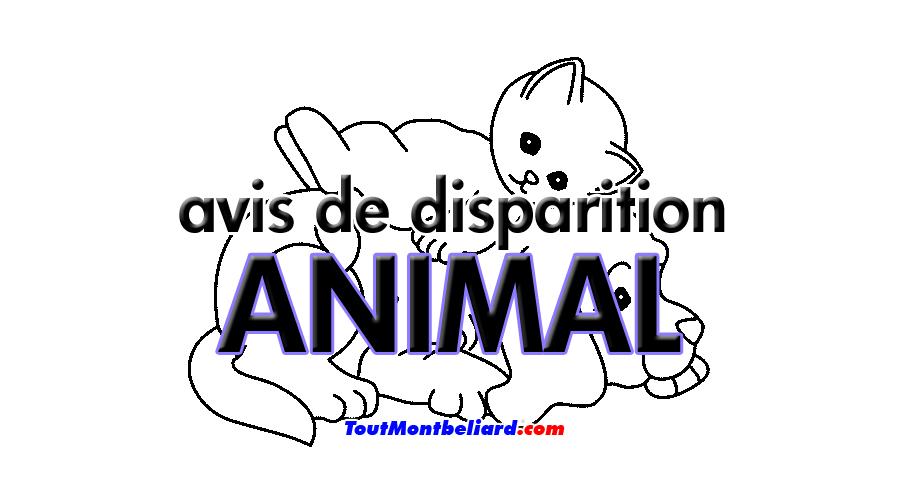 avis-disparition-animal